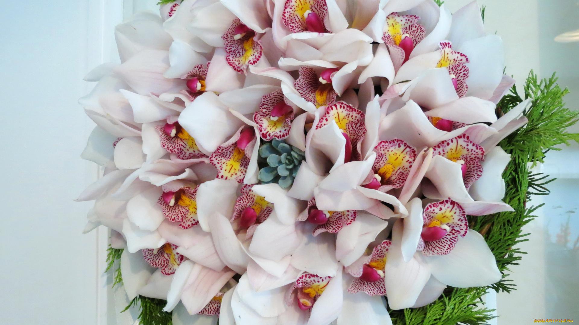 Цветы красивые букеты орхидеи
