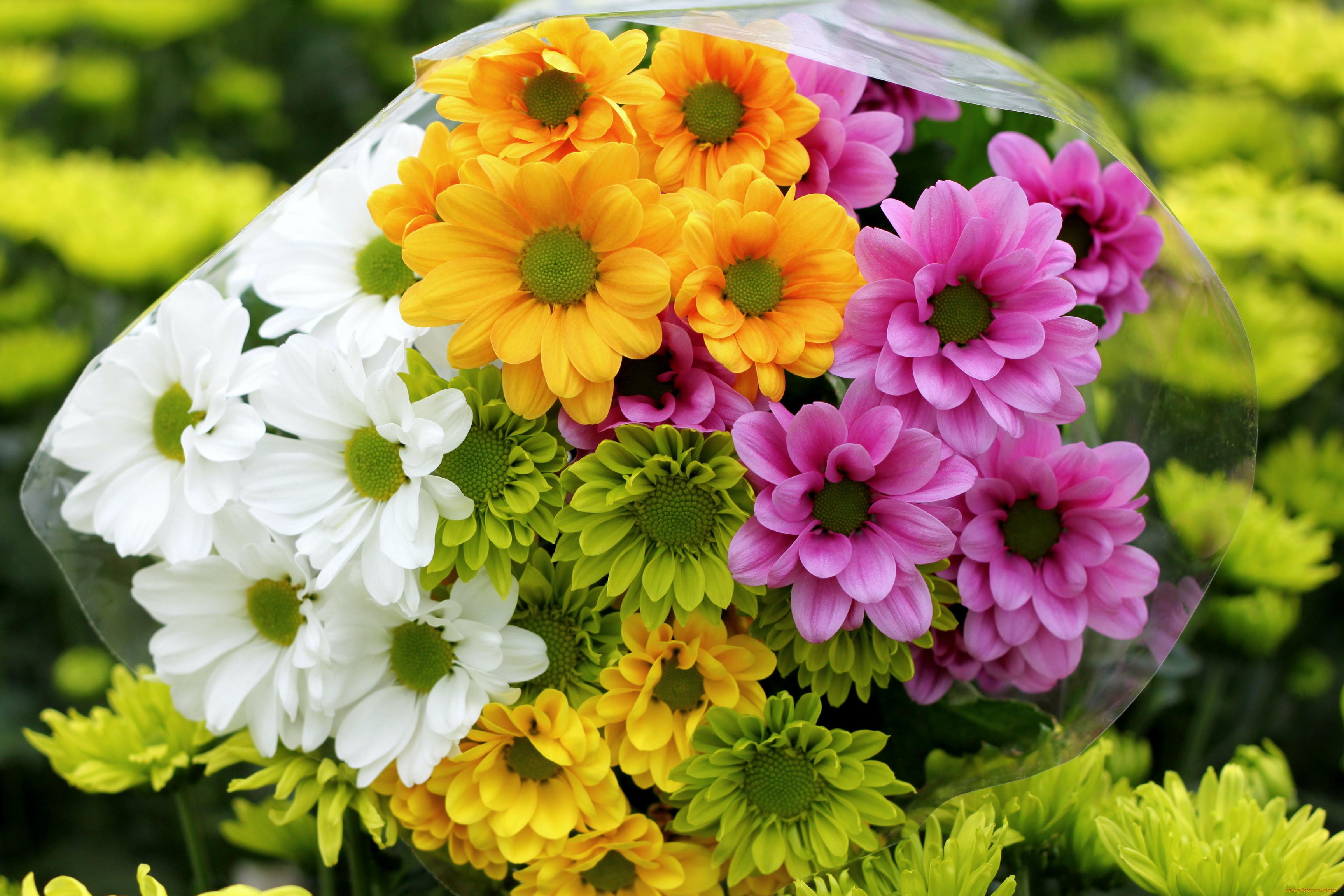 Картинки цветы хризантемы букеты, рисунки ежиком