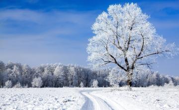 обоя природа, зима, колея, деревья, лес, снег, поле
