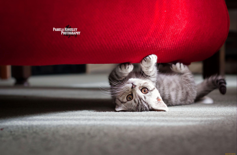 Кошка с розовыми когтями загрузить