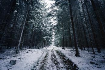 обоя природа, дороги, зима, дорога, следы, деревья, снег, лес, ветки