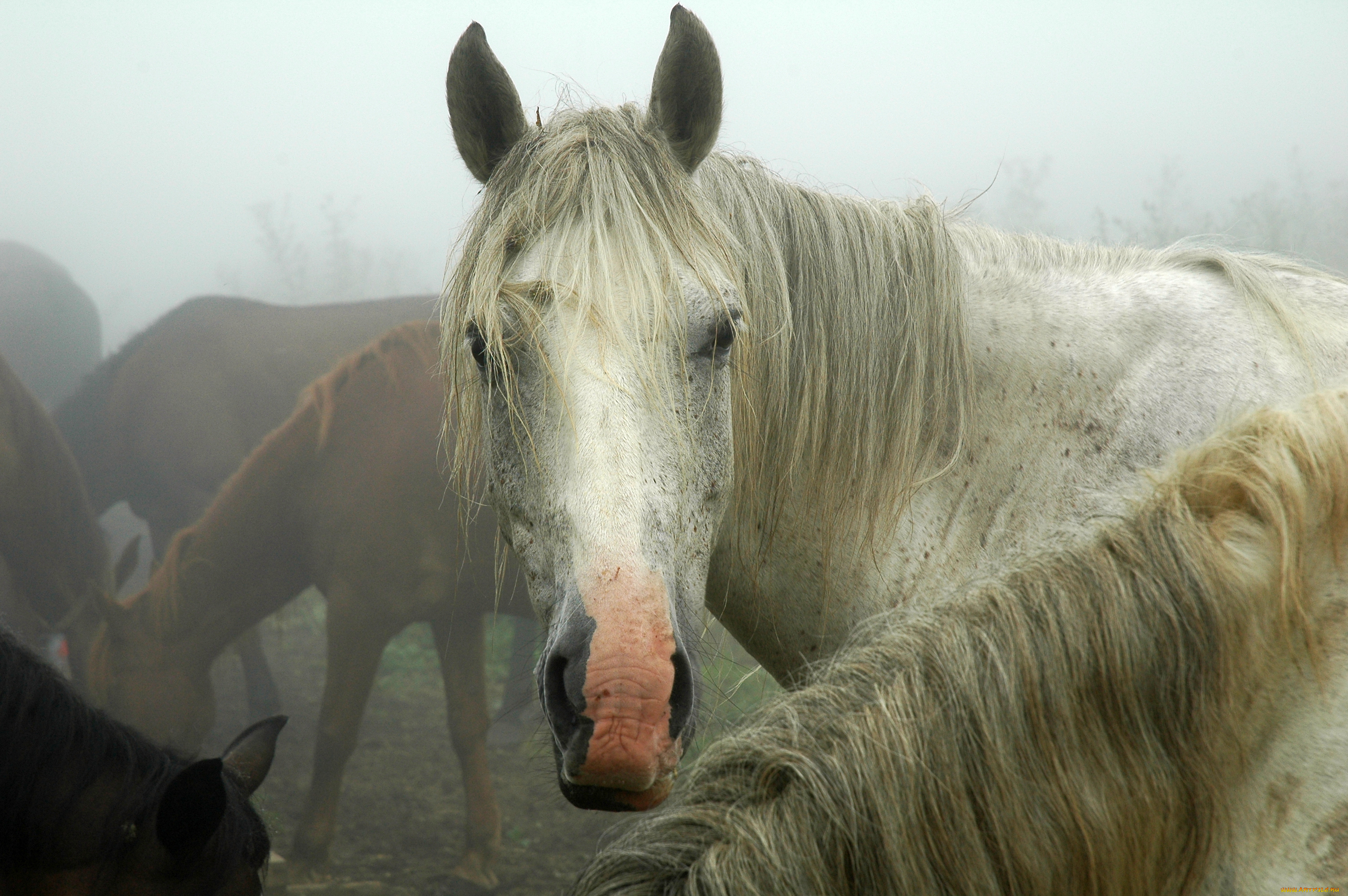 Белая лошадь бесплатно