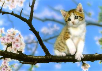Кот на ветке  № 1118401 бесплатно