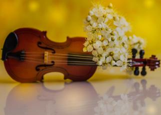 обоя музыка, -музыкальные инструменты, цветы, лепестки, скрипка, весна