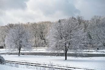 обоя природа, зима, снег, деревья, иней