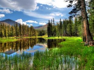 Картинка природа реки озера камыш деревья вода