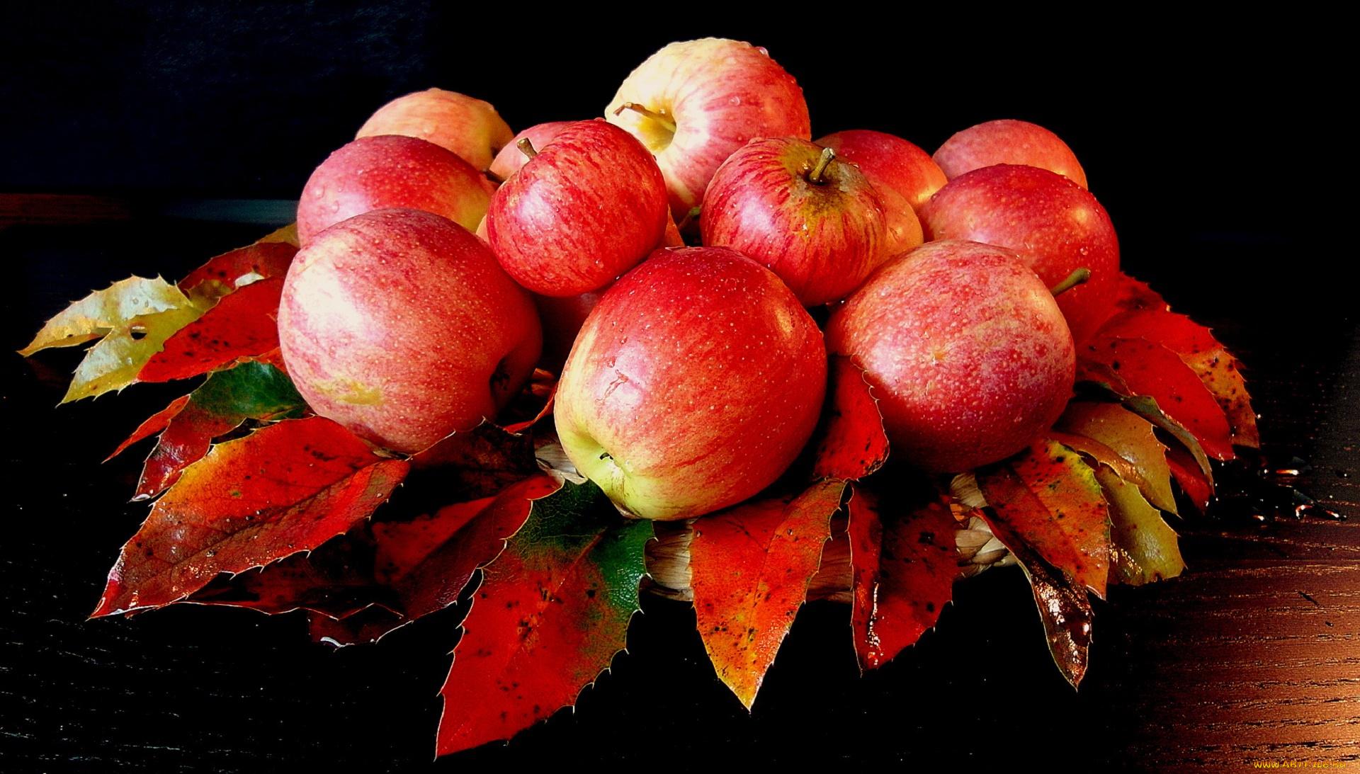 этот цветы яблоки листья картинки тому что