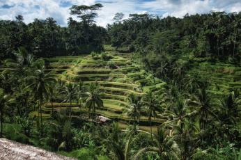 Картинка природа тропики джунгли холм террасы