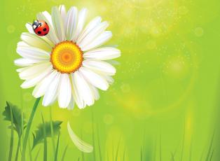 обоя векторная графика, цветы , flowers, божья, коровка, цветок, фон, ромашка, лето