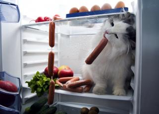 обоя юмор и приколы, холодильник, лакомка, сосиски, кот