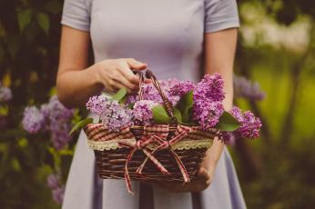 обоя цветы, сирень, корзинка, банты