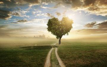 обоя разное, компьютерный дизайн, поле, небо, трава, любовь, дерево, сердце, love, field, landscape, heart, beautiful, tree, romantic