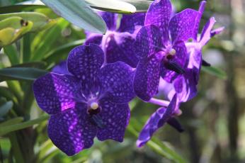 Картинка цветы орхидеи фиолет