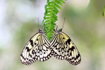 Картинка животные бабочки крылья