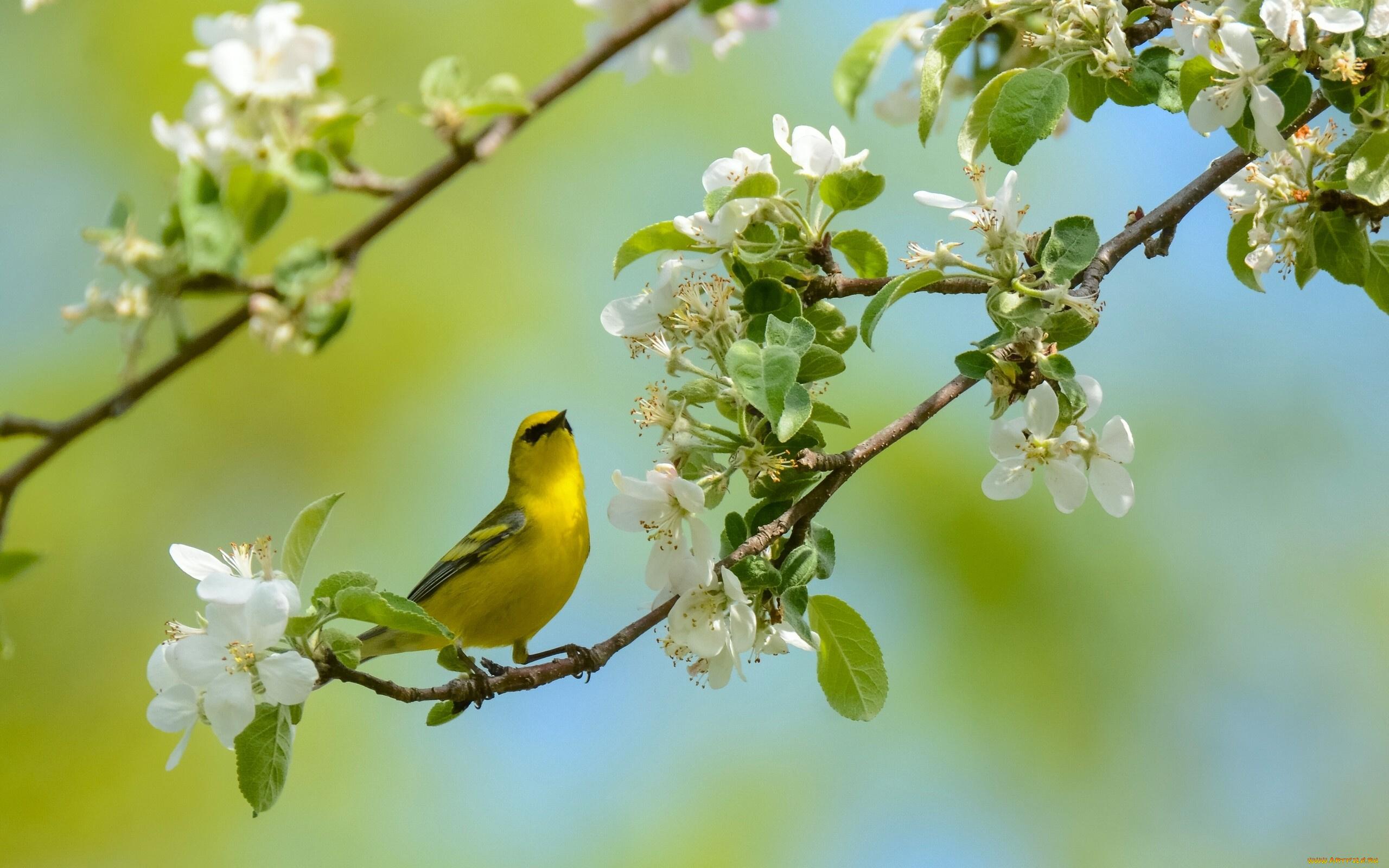 природа птицы животные весна  № 290767  скачать