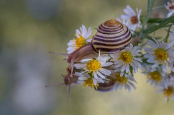 обоя животные, улитки, цветы, макро, отражение, улитка