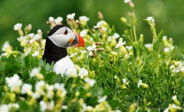 обоя животные, тупики, цветы, трава, птица, тупик