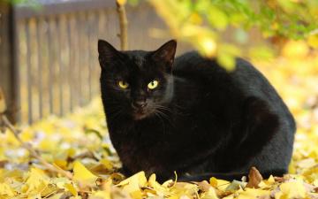 обоя животные, коты, листва