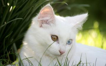 обоя животные, коты, трава, разные, глаза