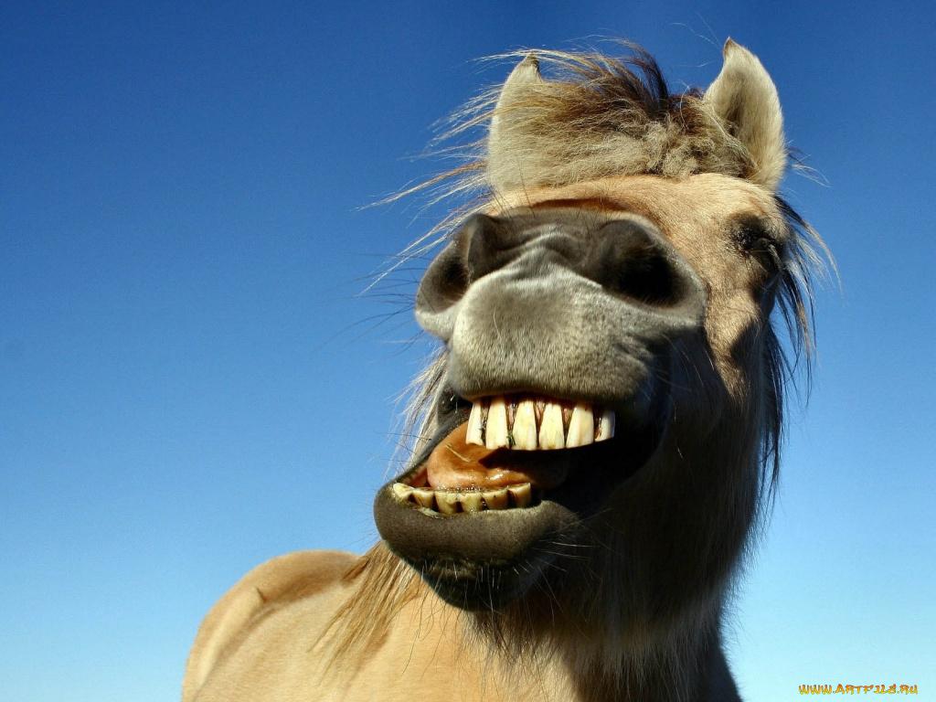 Прикольные картинки кони, для яна прикольный
