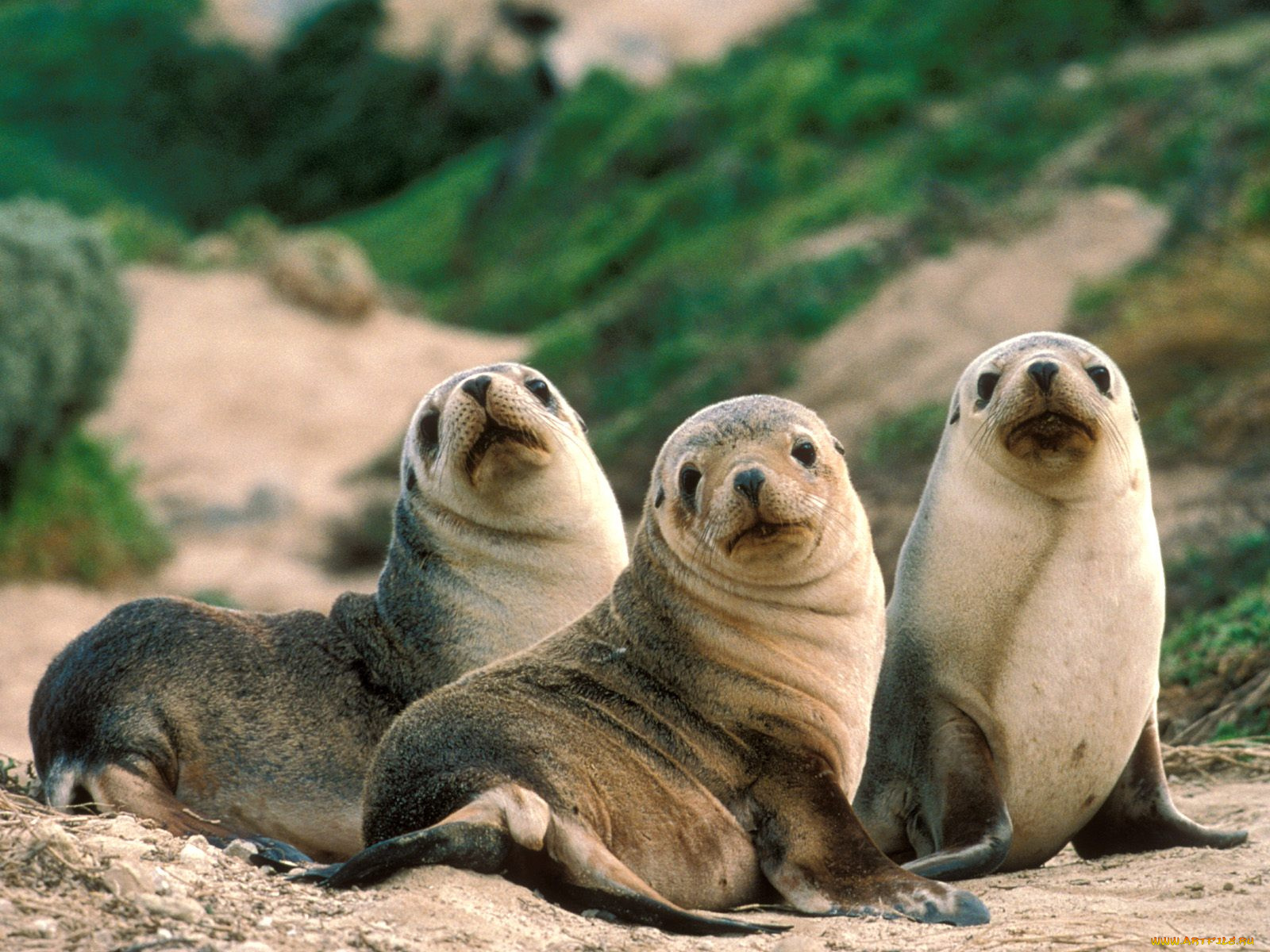 Днем, картинки морских животных смешные