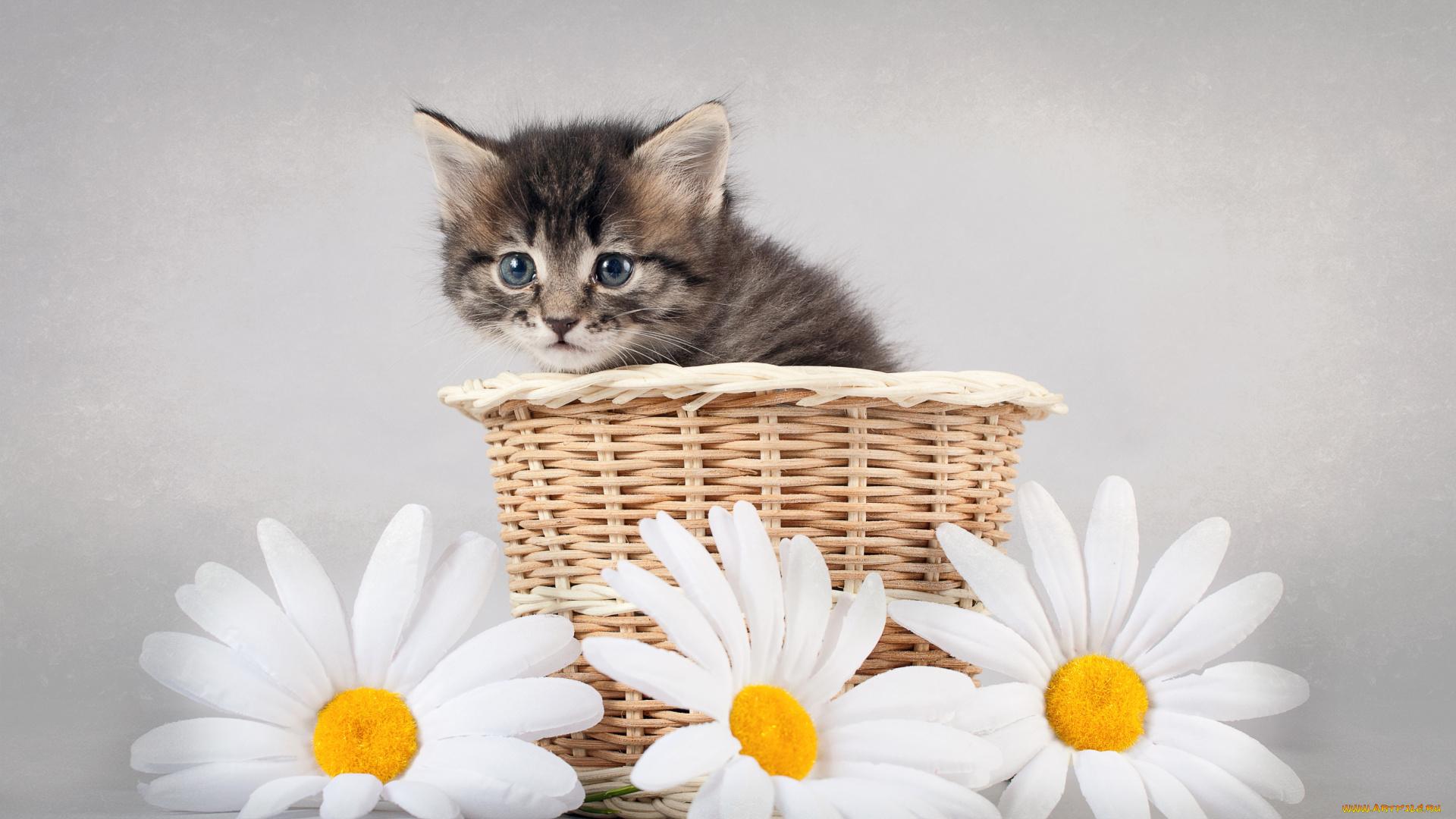 открытка сестре с котами планах парня участие
