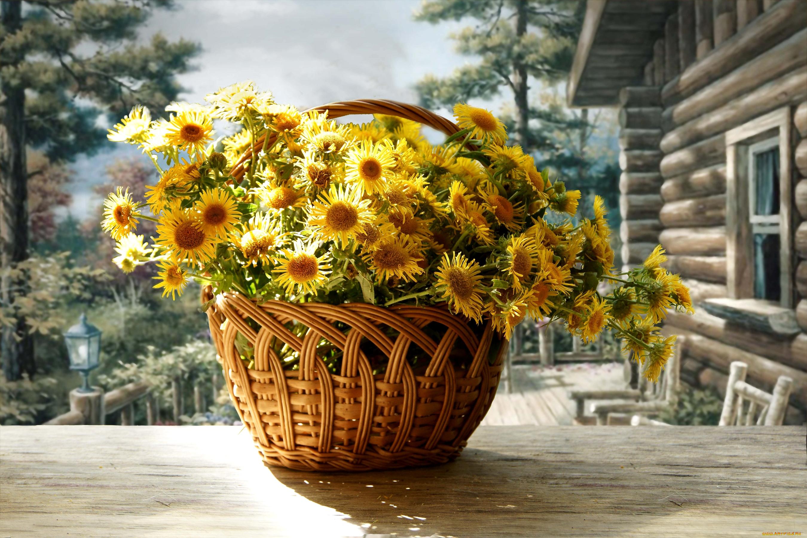 природа цветы корзина скачать