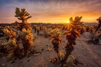 Картинка природа пустыни кактусы