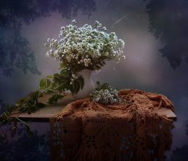 обоя цветы, ромашки, ночь, август, натюрморт, шаль, звездопад, лето