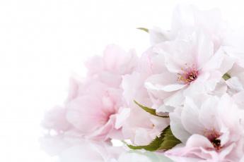 обоя цветы, цветущие деревья ,  кустарники, нежно, цветение, цветочки, листики, ветка