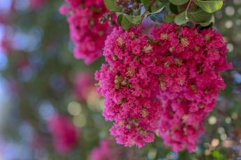 обоя цветы, малиновый, экзотика, макро