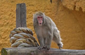 обоя животные, обезьяны, москва, макака, лето, обезьяна, июль, зоопарк, город