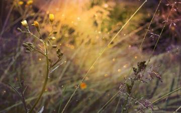 обоя цветы, луговые , полевые,  цветы, by, dashakern, боке, природа