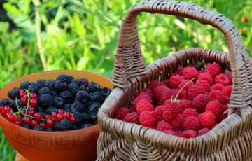 обоя еда, фрукты,  ягоды, дача, витамины, ассорти, ягоды, урожай, лето, природа, вкусно