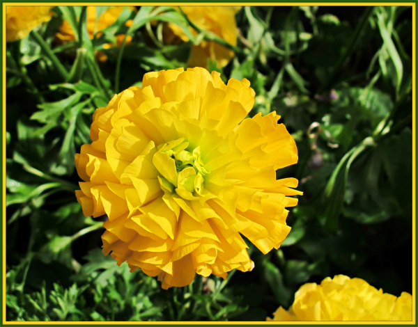 Galleryru / фото #3074 - цветы - emmir