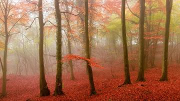 Картинка природа лес туман осень листья деревья