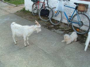 обоя животные, разные, вместе