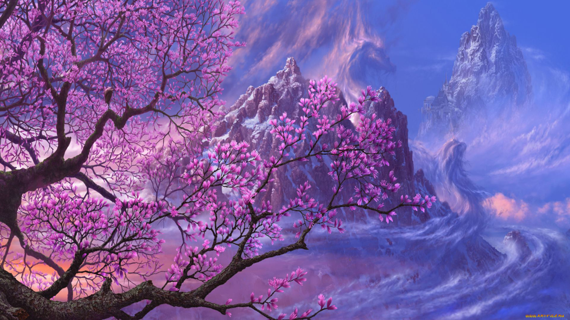 cherry blossom wallpaper - HD 1920×1080