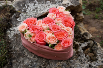 Картинка цветы розы розовые сердце композиция