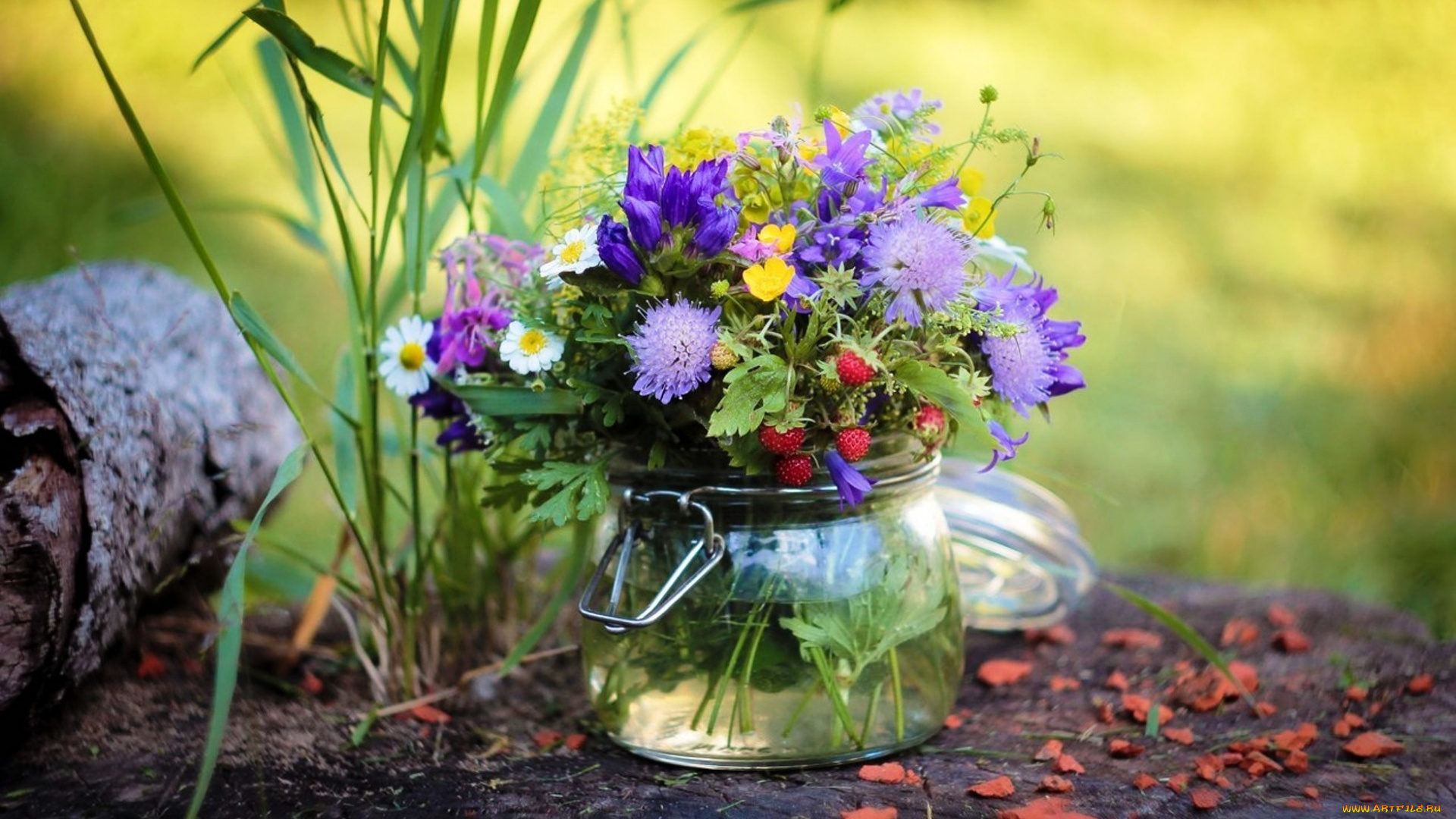 природа цветы ведро  № 464635  скачать