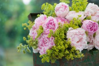 обоя цветы, пионы, букет, ящик