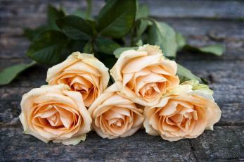 Картинка цветы розы бутоны букет