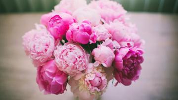 обоя цветы, пионы, букет, розовые