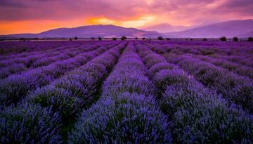 обоя цветы, лаванда, закат, поле, горы, ряды