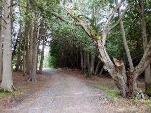 обоя природа, дороги, дорога, лесная