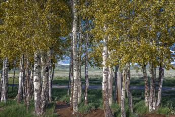 обоя природа, деревья, простор