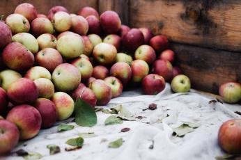 обоя еда, Яблоки, яблоки, фрукты