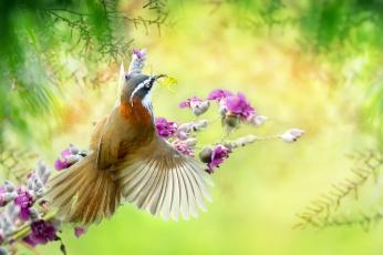 обоя животные, питты, природа, богомол, птица, ветки, тропики, насекомое, цветы