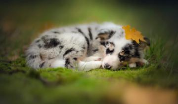 обоя животные, собаки, собака, осень, друг