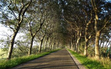 обоя природа, дороги, деревья, шоссе